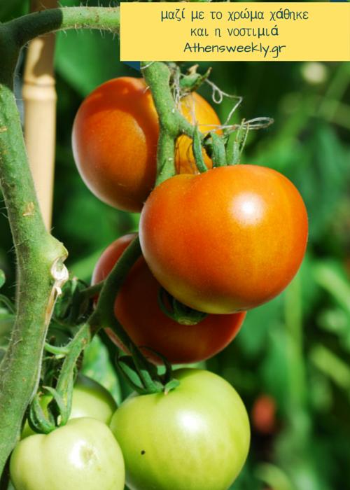 νοστιμη-ντομάτα-ντομάτα
